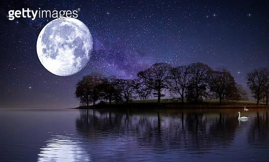Moonlight Swans - gettyimageskorea