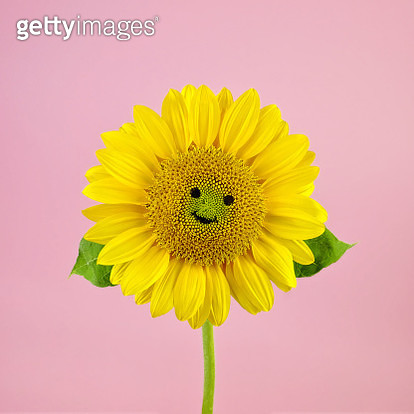 Sunflower Smiley Face - gettyimageskorea
