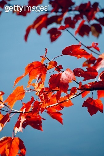 Low Angle View Of Autumnal Leaves Against Sky - gettyimageskorea