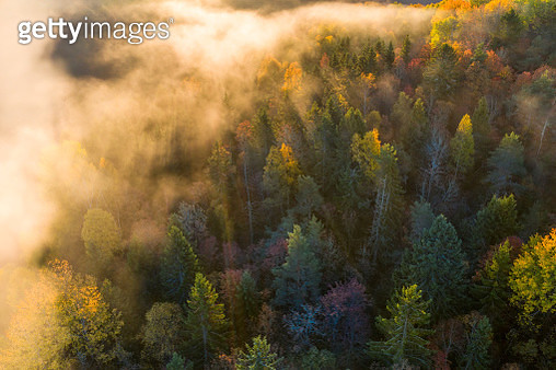 This image was taken with a drone one early october morning in 2018. This woodland is located not far from a city called Sandefjord, Norway. - gettyimageskorea