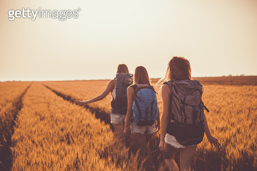 Rear view of three young women having fun while walking in warm summer sunshine through golden field of barley. They all have backpacks on their backs as they are going on a camping adventure together. - gettyimageskorea