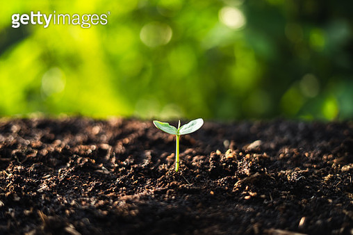 Close-Up Of Small Plant Growing On Field - gettyimageskorea