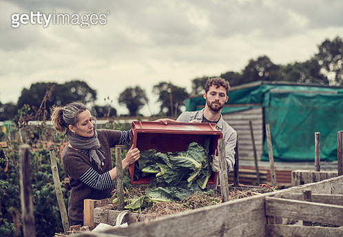 Two individuals working on their community allotment together - gettyimageskorea