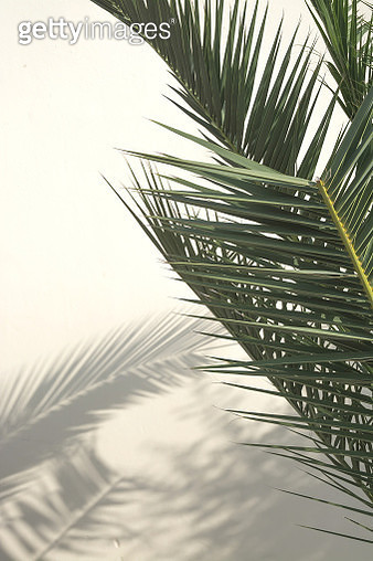 Close-Up Of Palm Tree Against Sky - gettyimageskorea