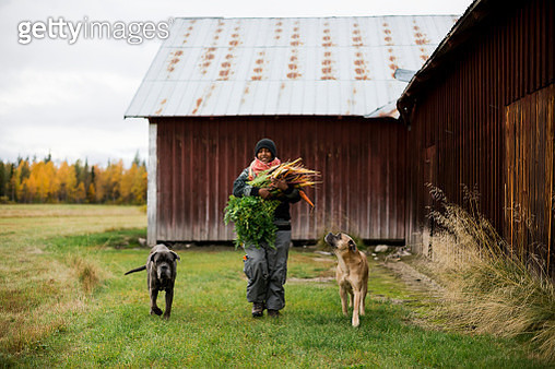 Woman with dogs and freshly picked carrots - gettyimageskorea