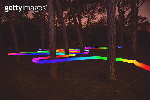Light painting using technology with light trail with worm shape changing color and moving in between the forest. - gettyimageskorea