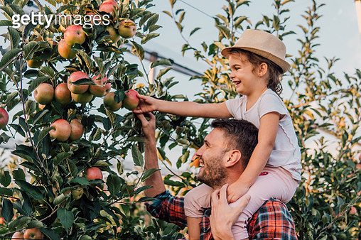 Man holding daughter piggy back at apple orchard - gettyimageskorea