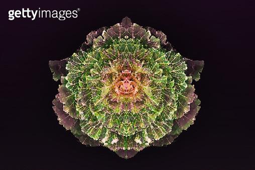 Cabbage - gettyimageskorea