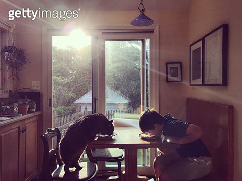 Portrait of a little boy eating breakfast at a table in the morning light with his Maine Coon cat. Childhood. Discovery and adventure. - gettyimageskorea