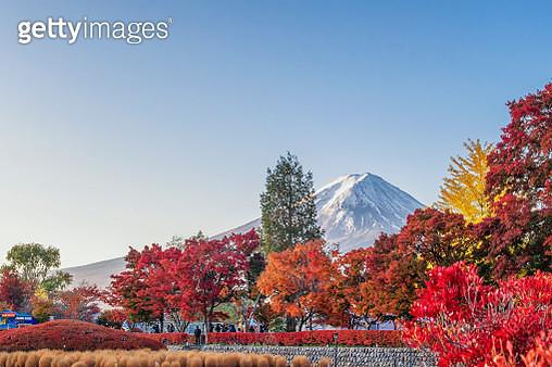 Fuji Mountain with Colourful maple trees at Maple Corridor in Autumn, Kawaguchiko Lake, Japan - gettyimageskorea