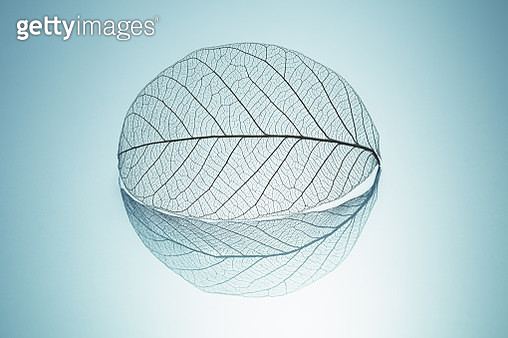 Leaf Skeleton with Reflection Shadow Round Shape Close-up View. - gettyimageskorea