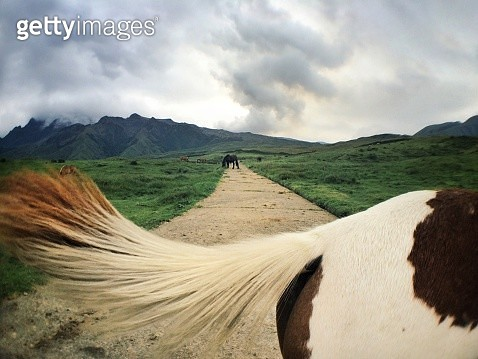 Cropped Image Of Horse On Field - gettyimageskorea