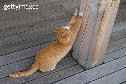 A stray stray cat is sitting on a wooden pier, waiting for the owner, sharpening its claws on a wooden pole. Adoption of pets. - gettyimageskorea