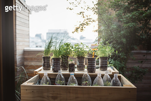 Gardening crafts made with recycled plastic bottles, environmental awareness is important to save our planet - gettyimageskorea
