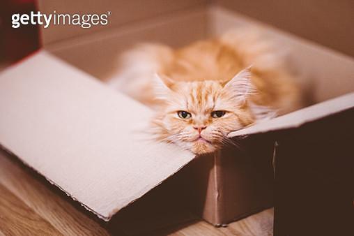 Cat in box - gettyimageskorea
