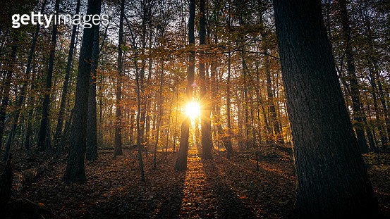 Sunrise autumn in Eindhhoven - gettyimageskorea