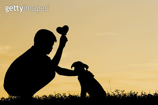 Silhouette Boy With Puppy Crouching On Field Against Sky During Sunset - gettyimageskorea
