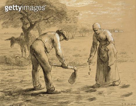 <b>Title</b> : Peasants planting potatoes (pencil and chalk on paper)Additional InfoPaysans plantant des pommes de terre;<br><b>Medium</b> : pencil and chalk on paper<br><b>Location</b> : Private Collection<br> - gettyimageskorea