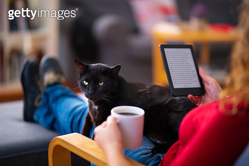 Woman sitting on a couch with her cat and using a chroma key screen tablet computer. - gettyimageskorea