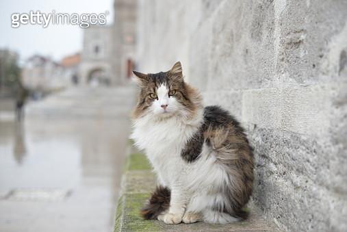 Portrait Of Cat Sitting On Wall - gettyimageskorea
