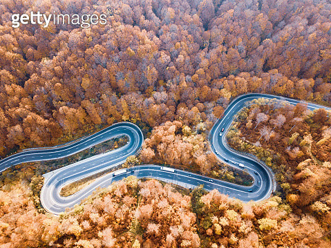 High Angle View Of Road Amidst Plants In Forest - gettyimageskorea