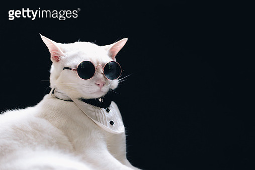 Close-Up Of Cat Wearing Sunglasses While Sitting Against Black Background - gettyimageskorea