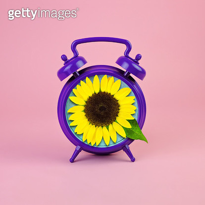 Purple alarm clock with sunflower face - gettyimageskorea