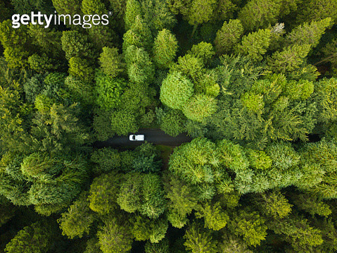Aerial view of a pine forest with a white van driving through a pathway, Roscommon, Ireland - gettyimageskorea