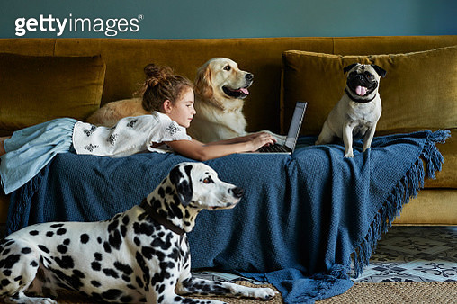 Girl lying on sofa & typing on laptop with 3 dogs - gettyimageskorea