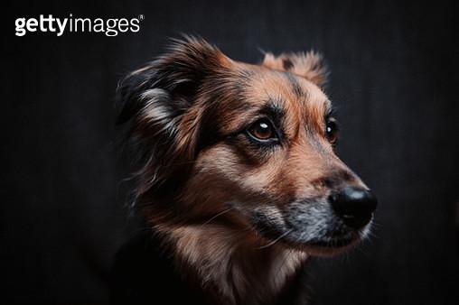 Dog Portrait - gettyimageskorea