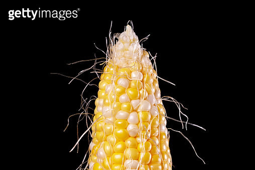 Close up shot of bi-color corn on the cob on a black background - gettyimageskorea