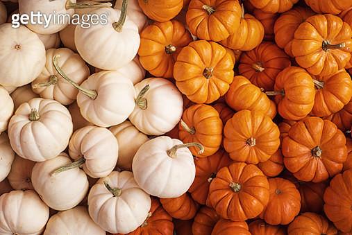 A lot of pumpkins! - gettyimageskorea