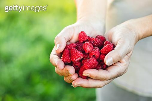 Woman hands holding fresh red raspberries - gettyimageskorea