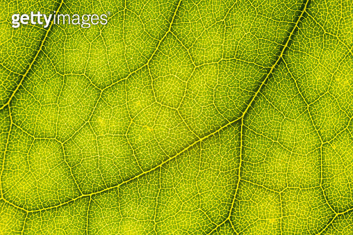 Full Frame Shot Of Green Leaf - gettyimageskorea