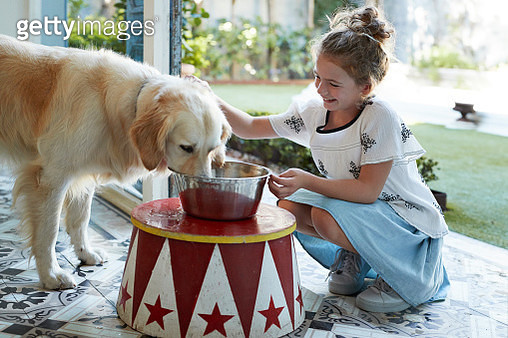 Cute girl serving bowl of water for her Golden Retriever dog - gettyimageskorea