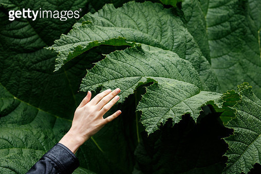 Close-Up Of Hand On Leaf - gettyimageskorea