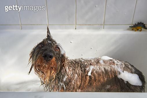 Dog having a bath - gettyimageskorea