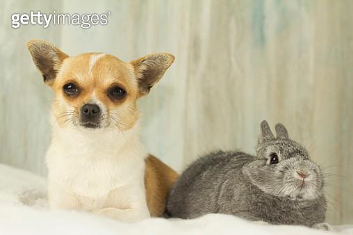 Rabbit and Dog - gettyimageskorea