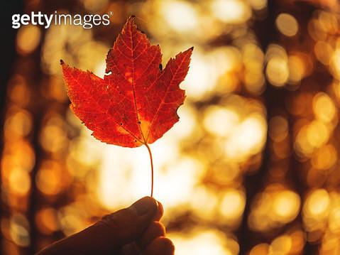 Foliage 03 - gettyimageskorea