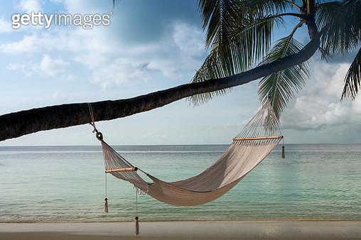 Hammock hanging on palm tree at beach - gettyimageskorea