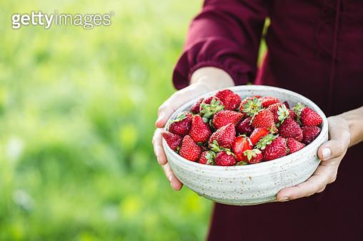 Female picking fresh berries - gettyimageskorea