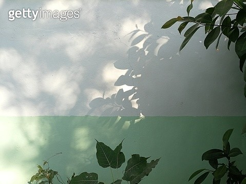 Close-Up Of Leaves Against Sky - gettyimageskorea