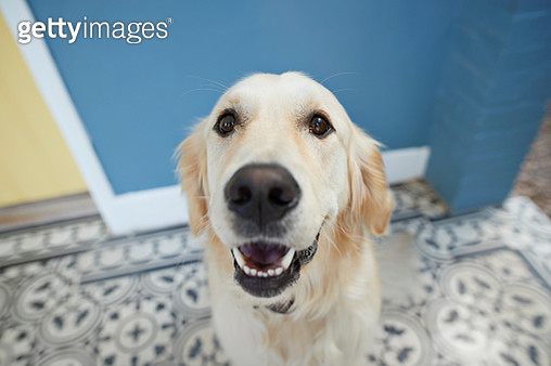 Everyday life at home with dogs - gettyimageskorea