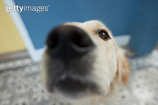 Cute dog shot from POV / selfie angle - gettyimageskorea