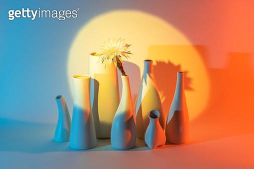 Cactus Flower in Vase Under a Spotlight - gettyimageskorea