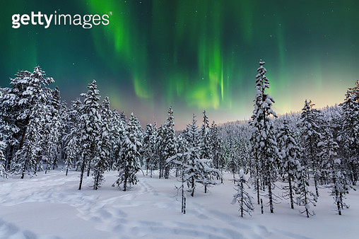 Winter forest at at night under the northern lights. Finland - gettyimageskorea