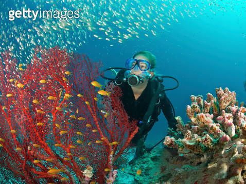 scuba diver admires fish and red fan coral - gettyimageskorea