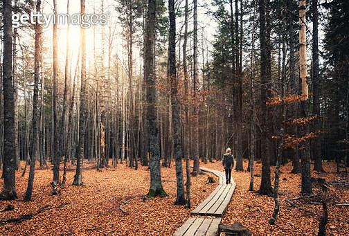Walking In Autumn Forest - gettyimageskorea