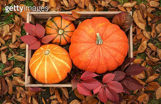 Pumpkins in wooden crate - gettyimageskorea