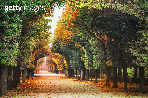 Autumn leaf coloured view of alley in Schönbrunner Schlosspark / Park of Schönbrunn, Vienna - gettyimageskorea